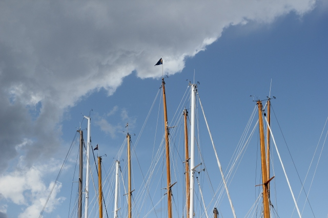 a mass of masts