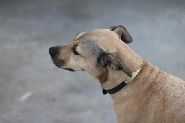 canine profile