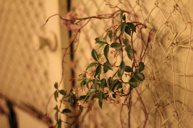 flowering on the fence