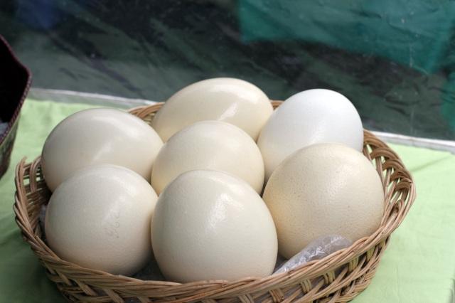 union square farmer's market ostrich eggs