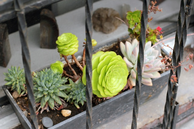 succulents on the sill