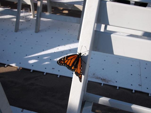 brooke & jon's wedding butterfly