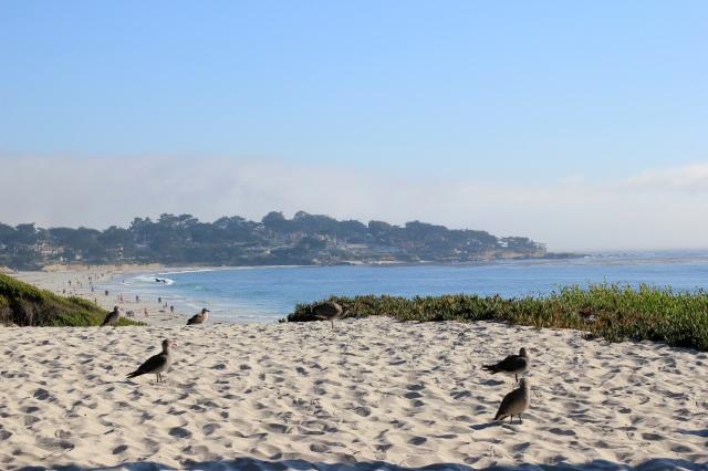 carmel beach birds