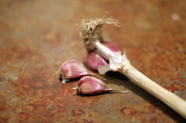 homegrown garlic