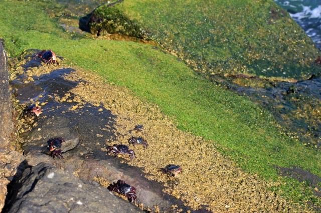 ballona creek marina del rey crabs