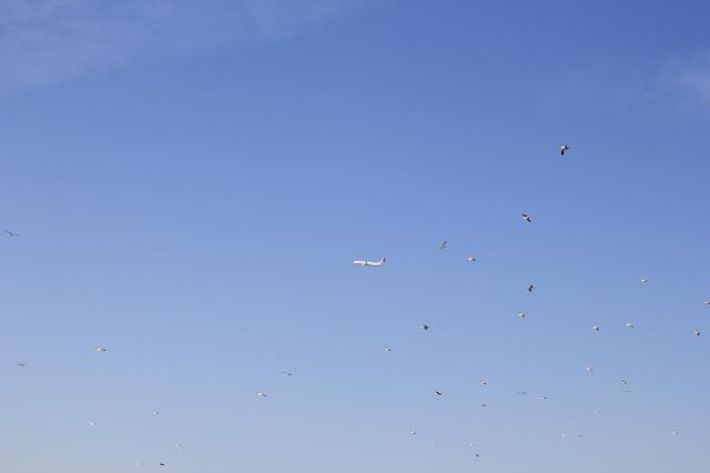 airplane & birds