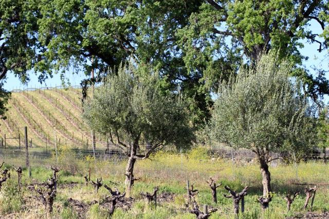 tablas creek vineyard paso robles