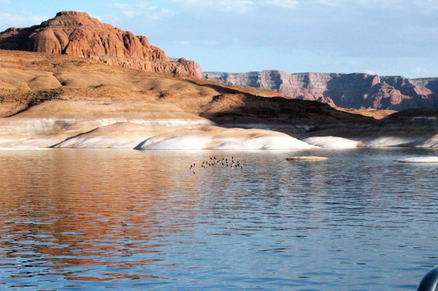 birds lake powell