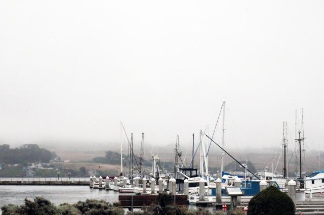 boats bodega bay