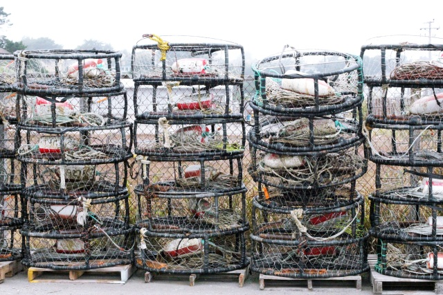 crab traps bodega bay