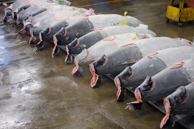 tuna auction tsukiji fish market tokyo